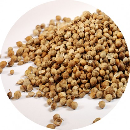 koriandrova semena